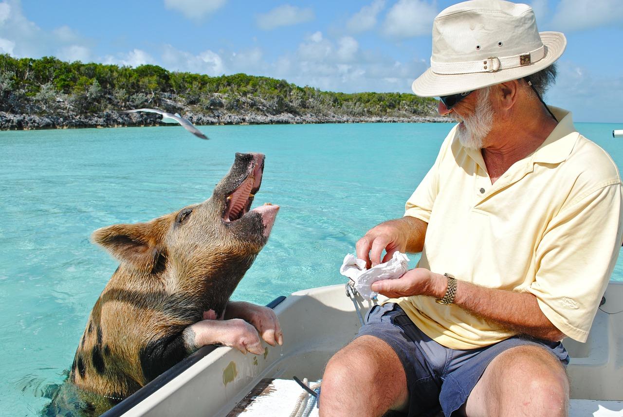 staniel cay, exumas bahamas, swimming pig